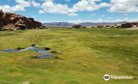 Uyuni White And Green Bolivia