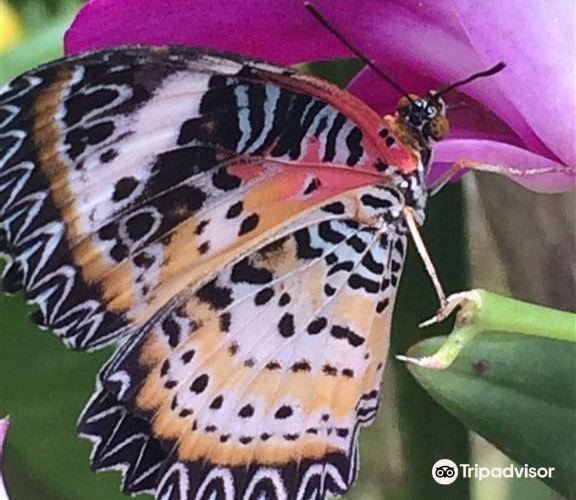 蝴蝶園與昆蟲王國3