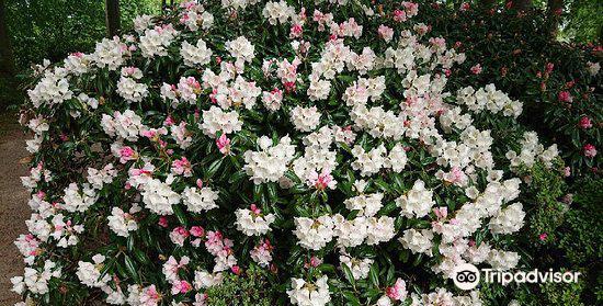 Rhododendronparken4