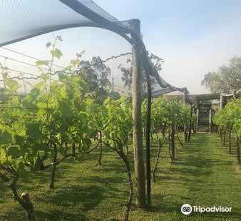 Raleigh Vineyard & Winery