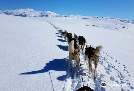Senja Husky Adventure